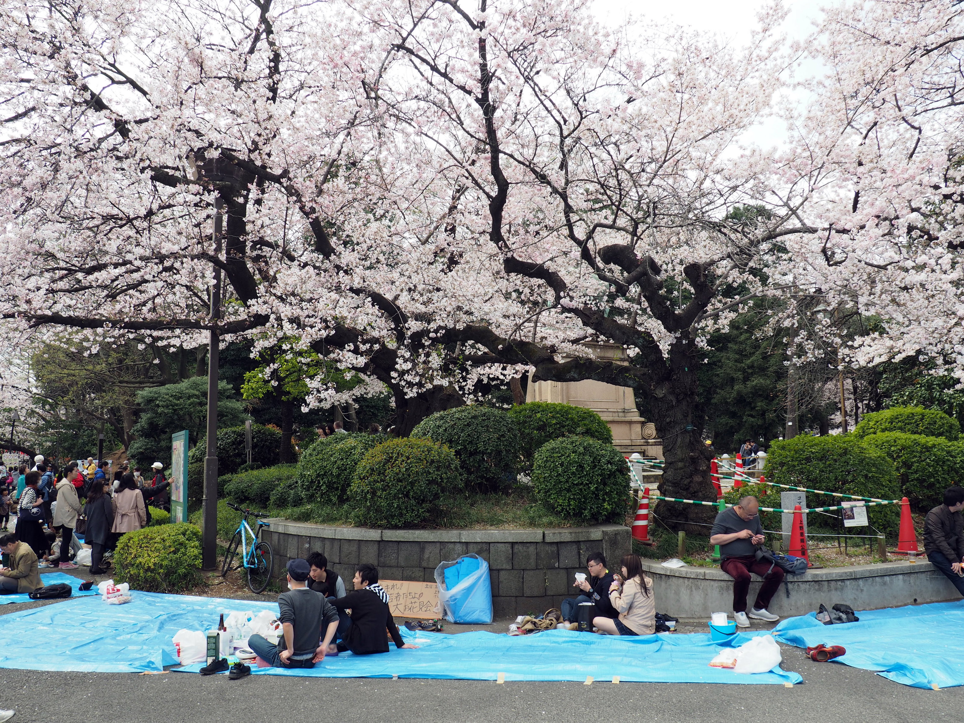Planen im Ueno Park