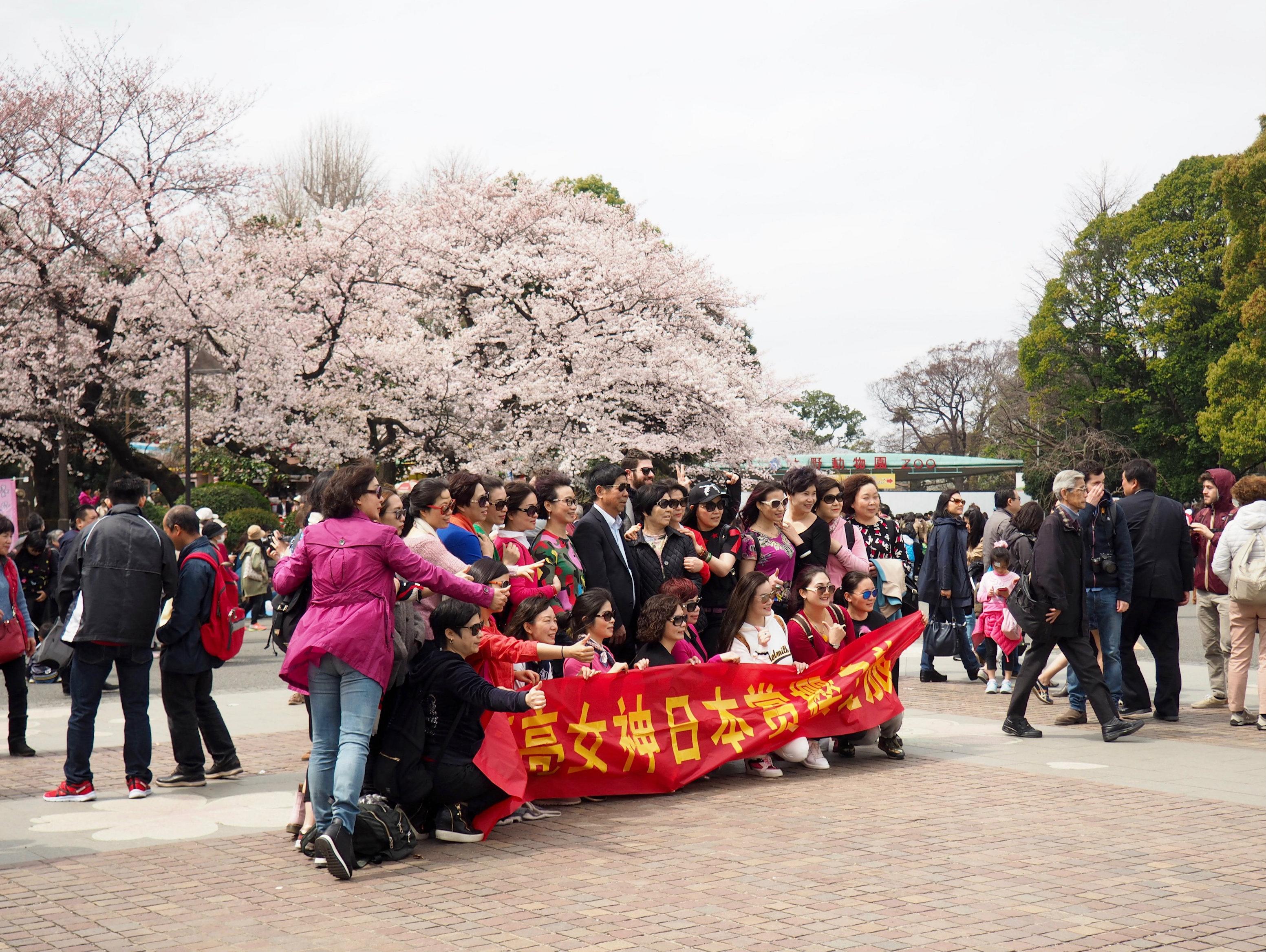 Massenandrang im Ueno Park zur Kirschblüte